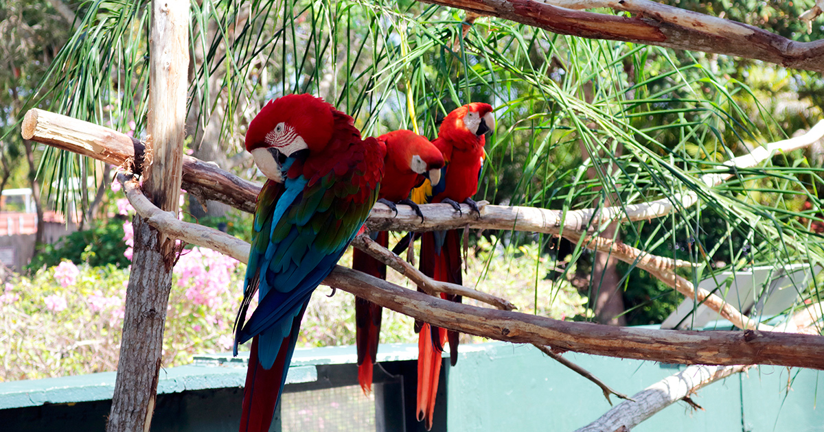 Zoo, Miami, Florida