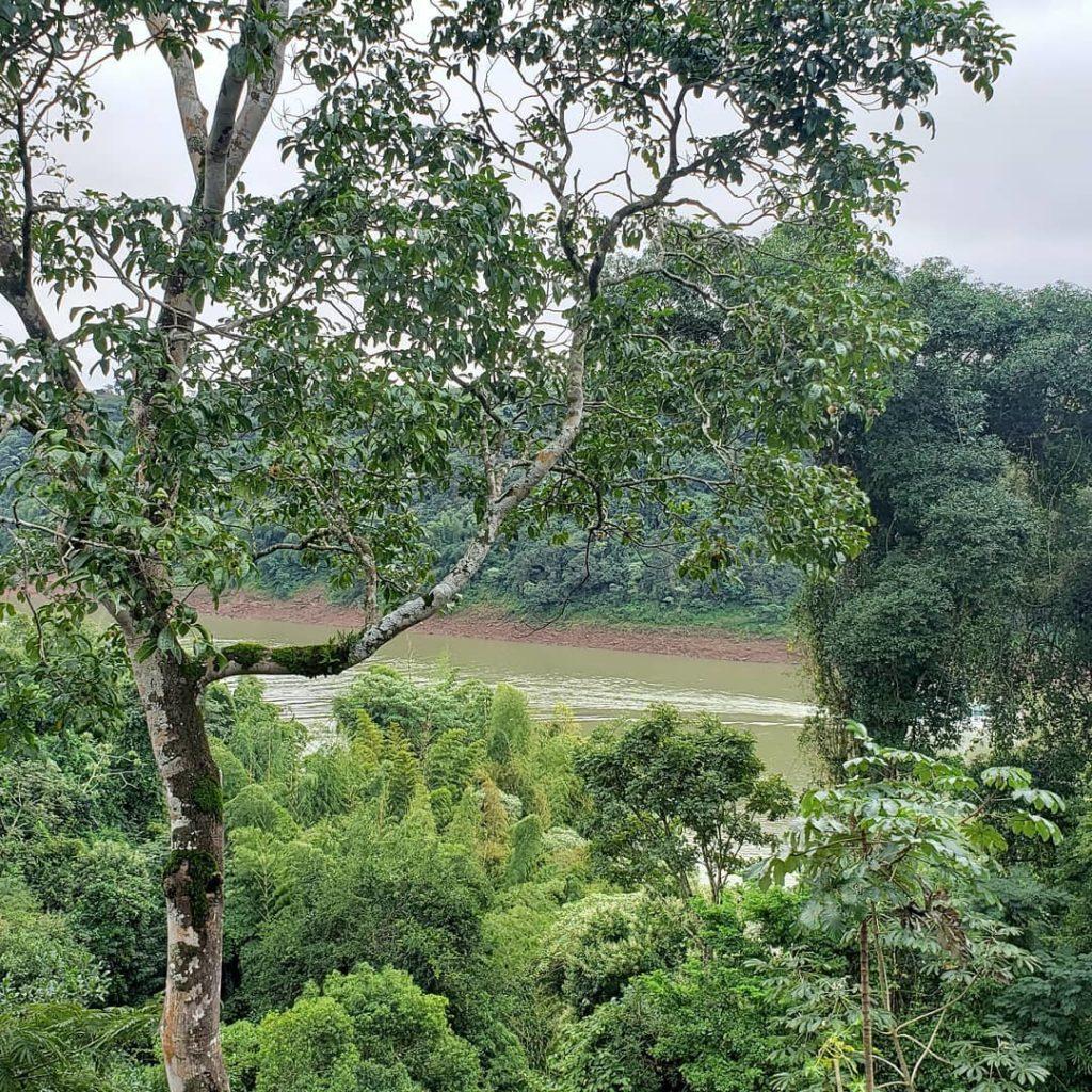 selva iryapú